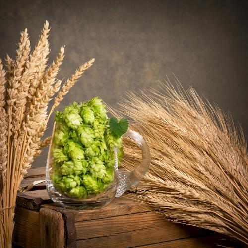 Hops and Grain